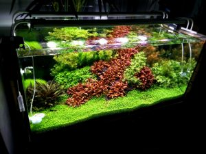 Was ist Aquascaping