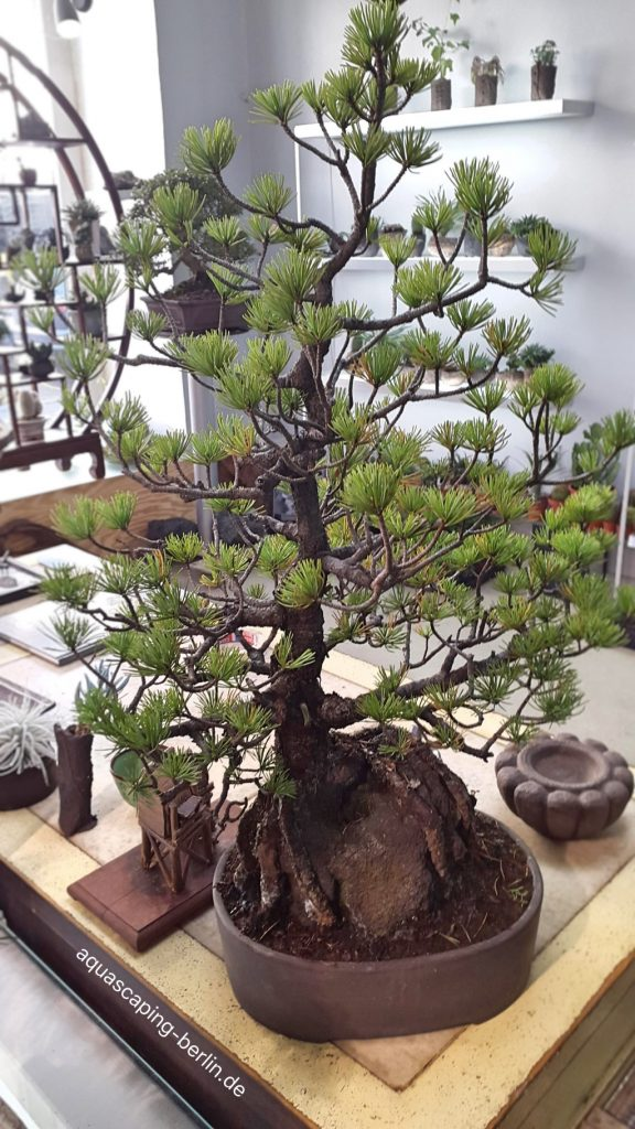 Japan-Bonsai-Berlin