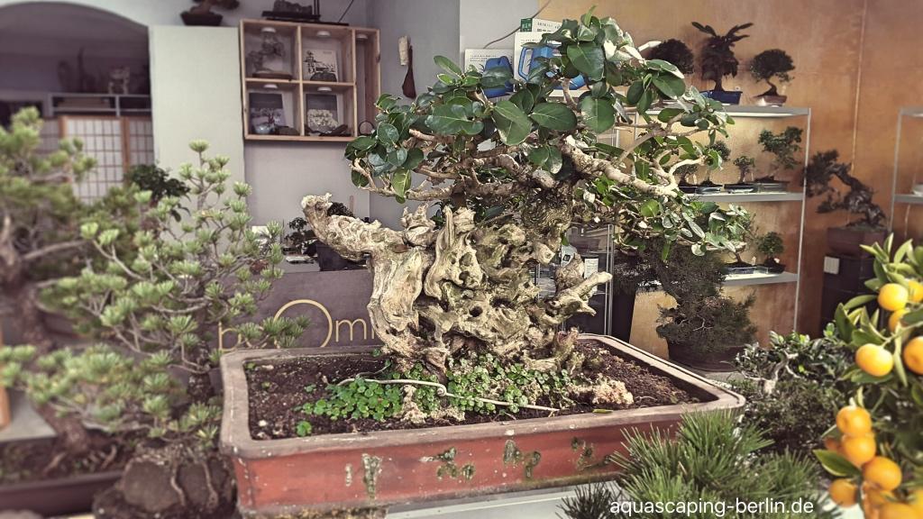 japan bonsai in berlin aquascaping berlin. Black Bedroom Furniture Sets. Home Design Ideas