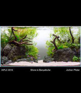 Aquascaping Layout Banyalbufar für IAPLC 2016