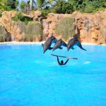 Delfin Show Loro Parque Teneriffa - Per Anhalter durch die Galaxis