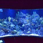 Meerwasseraquarium Teneriffa