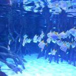 Meerwasseraquarium Loro Parque