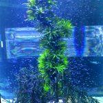 Neon-Aquarium