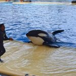 Orca Show Loro Paque Teneriffa