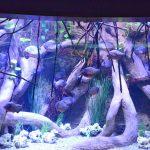 Piranhas Aquarium