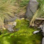 Algen in einem Bachlauf