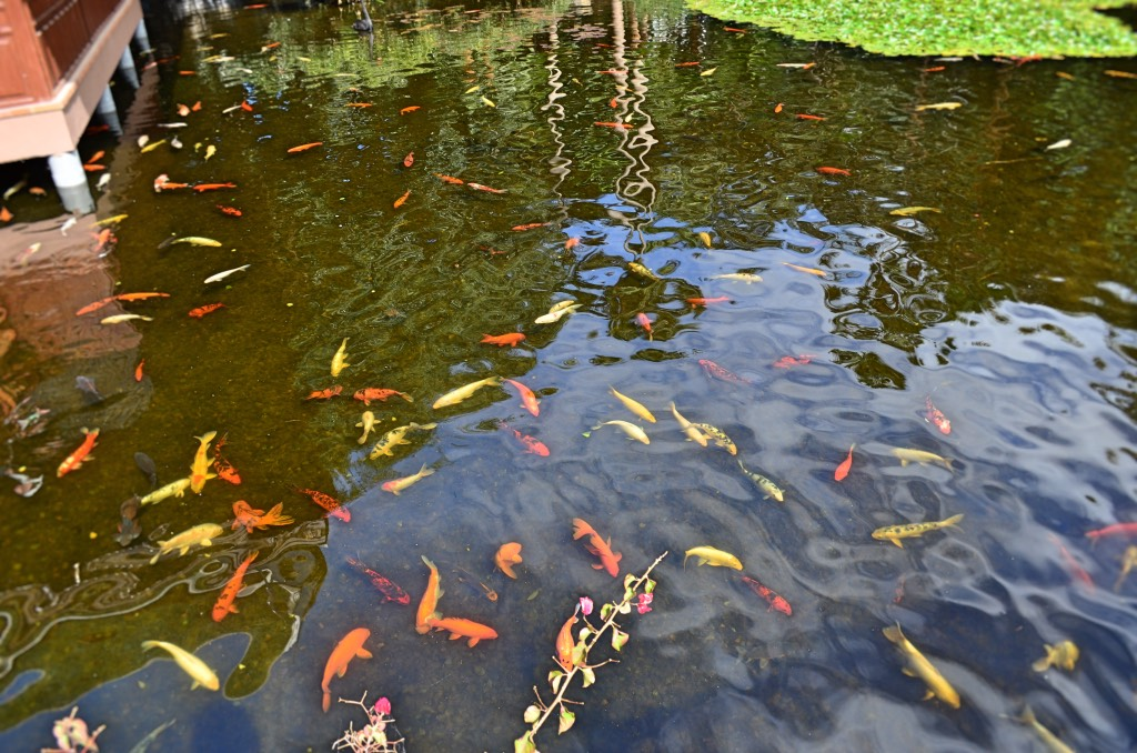 Aquarium im loro parque auf der kanareninsel teneriffa mit for Aquarium im teich
