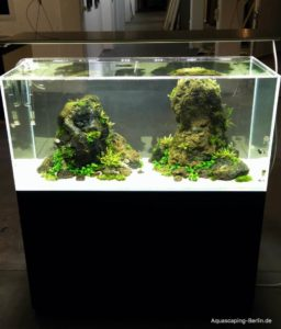 Aquascaping von AquaDesign Berlin
