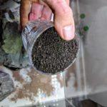 Aquarium Soil normal