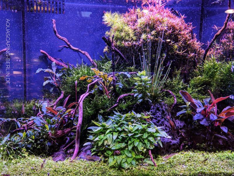 warum co2 im aquarium so wichtig ist aquascaping berlin. Black Bedroom Furniture Sets. Home Design Ideas