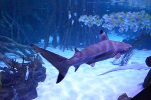 Shark City Pfungstadt - Beispielbild eines Zoo Aquariums auf Teneriffa.