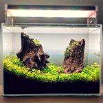 Nano Aquarium als Aquascape