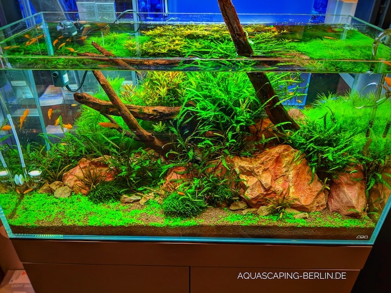 Aquascape mit ADA Soil