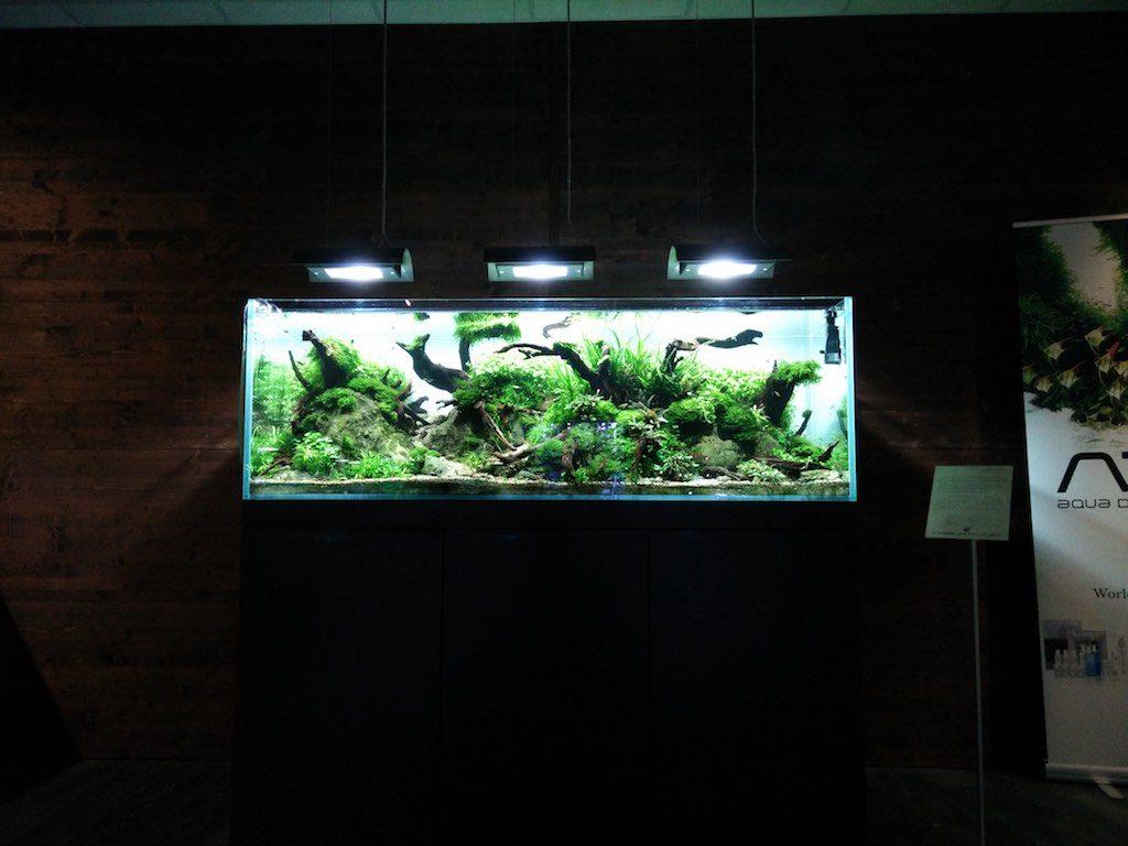 Aquascape im Garnelenhaus Hamburg