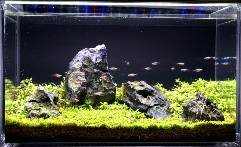 ADA Iwagumi Aquascape