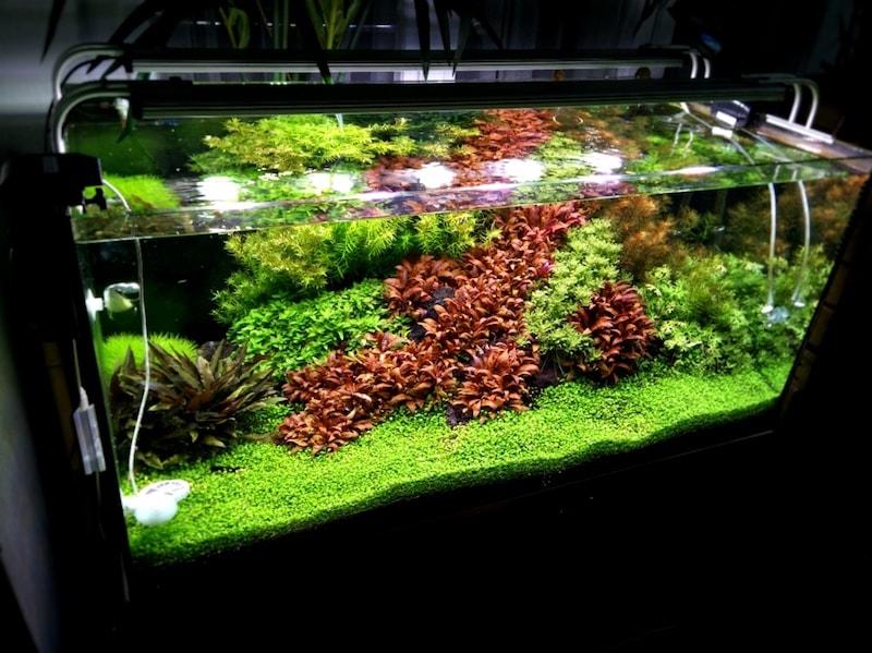 was ist aquarium soil unterschiede zu kies und sand mehr hier. Black Bedroom Furniture Sets. Home Design Ideas