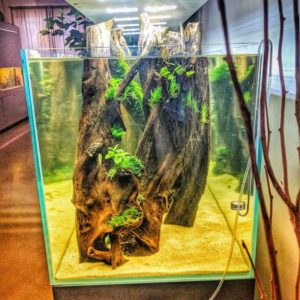 Aquascaping mit Co2-Anlage