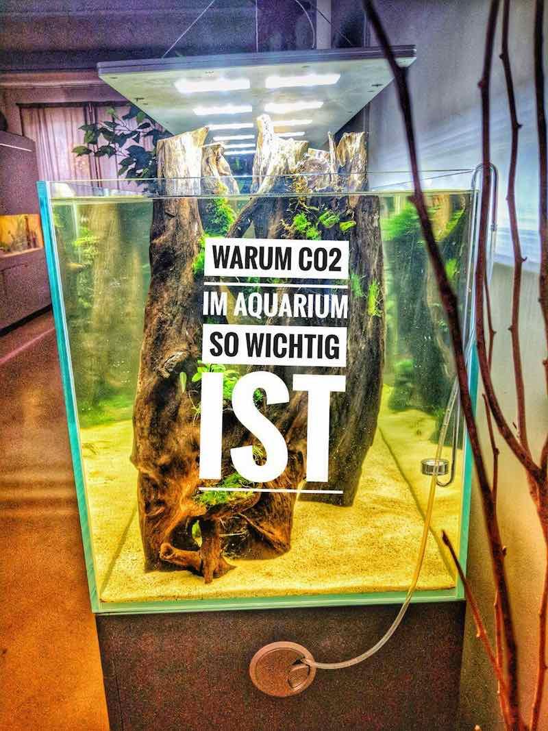 Warum Co2 im Aquarium so wichtig ist