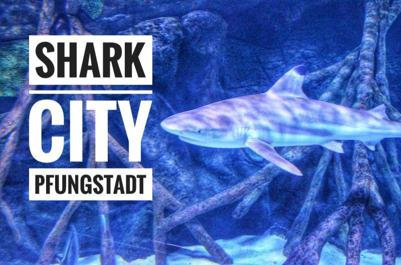 Shark City Pfungstadt