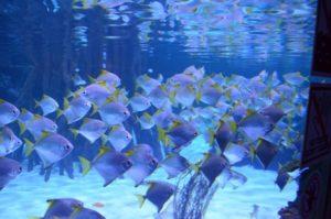 Mega Aquarium Pfungstad