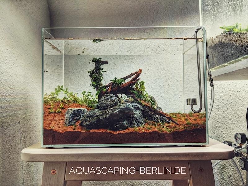 Sauerstoff im Aquarium: O2 für ein perfekt laufendes Aquascape