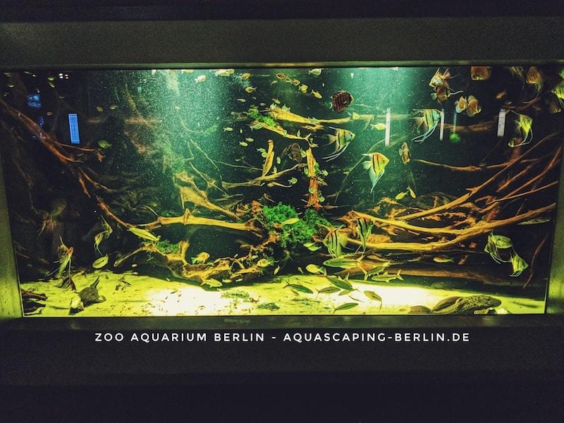 Zoo-Aquarium Berlin Amazonas-Aquarium