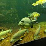 Süßwasseraquarium