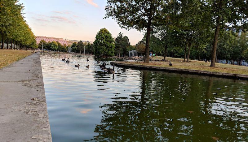 Küken-Killer-Raubfisch-Wels lebt jetzt in Darmstadt