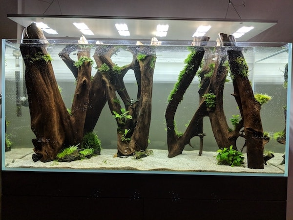 Aquascaping ohne Soil-Bodengrund