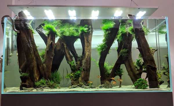 Was ist die beste Aquarium Beleuchtung fürs Aquascaping?