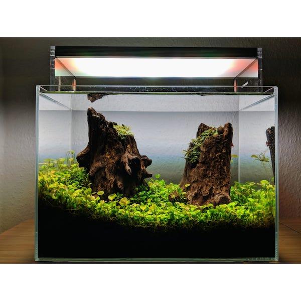 Nano Aquarium Aquascape