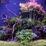 Nano Aquascape mit Soil und Pflanzen