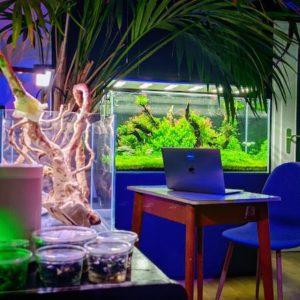 Aqua-Grow LED Beleichtung