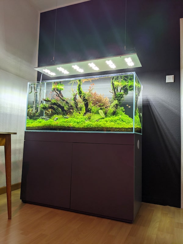 Aquascape Design Aquarium