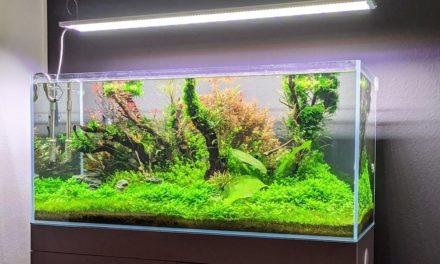 Erfahrungen mit der Aqua Grow Uniq FS 120