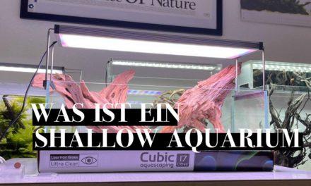 Was ist ein Shallow Aquarium?
